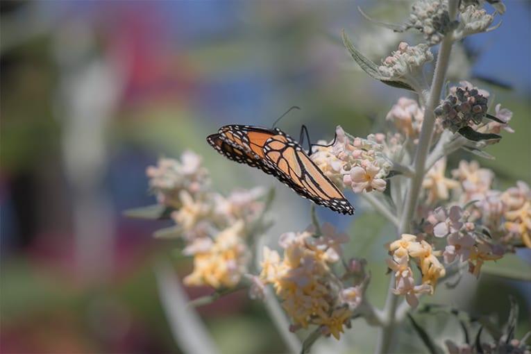 22 maggio: giornata internazionale della biodiversità