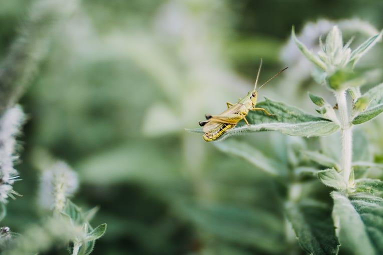 Negli ultimi trent'anni un quarto degli insetti in meno
