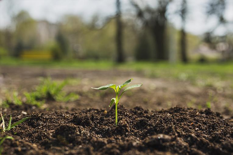 Sicilia: prorogato di due anni il bando 2015 per l'Agricoltura Biologica