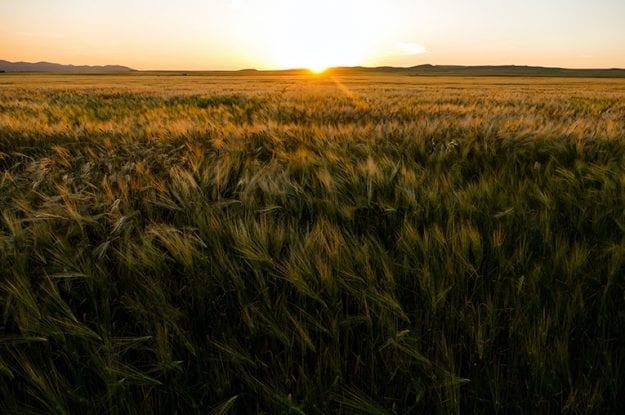 Agricoltura biologica: benefici ed opportunità per l'agroalimentare italiano