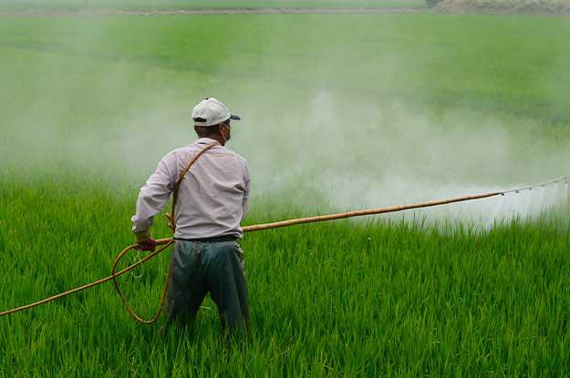 L'AGRICOLTURA INTENSIVA MIGLIORE O UGUALE DI QUELLA BIOLOGICA? UNO STUDIO SU NATURE SMENTISCE QUESTA TESI