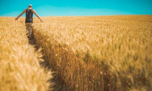 AGRICOLTURA BIOLOGICA: UN TOCCASANA PER L'AMBIENTE, IL CONSUMATORE E L'AGRICOLTORE