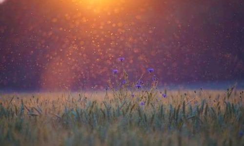 IL NUOVO ACTION PLAN PER L'AGRICOLTURA BIOLOGICA