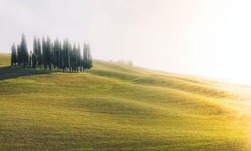 """EUROPA """"BIO"""": CRESCONO DEL 46% LE AREE COLTIVATE AD AGRICOLTURA BIOLOGICA DAL 2012"""