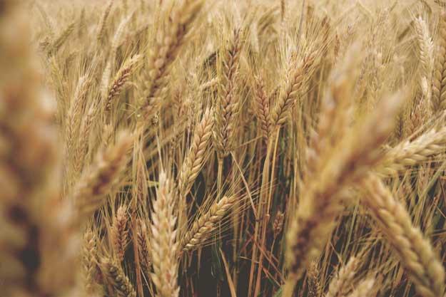 COPA E COGECA: APERTURA E COLLABORAZIONE A SOSTEGNO DELL'AGRICOLTORE BIOLOGICO