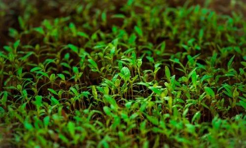 AGRICOLTURA BIOLOGICA: SCELTA STRATEGICA PER UNA RIPRESA SOSTENIBILE, SECONDO CONFEURO