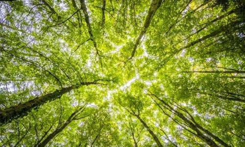 AGROECOLOGIA: LA CHIAVE D'ACCESSO ALLA RIVOLUZIONE GREEN, SECONDO IL WWF