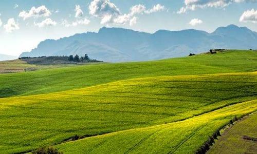NONOSTANTE LA STASI DELLE POLITICHE AGRICOLE, NASCE IL BIO-DISTRETTO DEL RISO PIEMONTESE