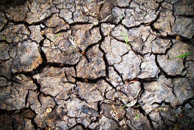 PRODUTTIVITÀ AGRICOLA A RISCHIO: L'INQUINAMENTO RIDUCE LE POTENZIALITA' DEI SUOLI DEL 25%