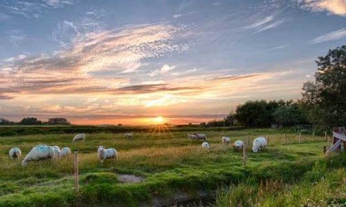 AGRICOLTURA BIOLOGICA RIGENERATIVA: IL PRIMO CENTRO EUROPEO, NASCERÀ A PARMA