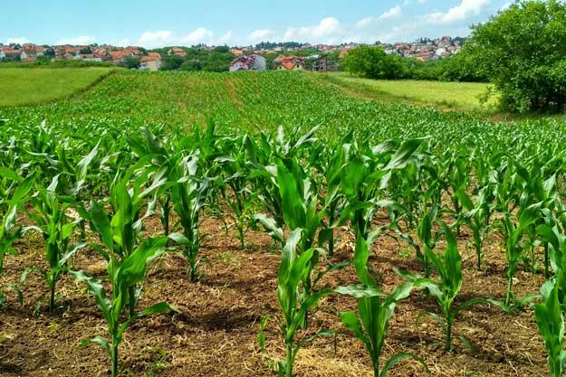 NUOVE RISORSE PER L'AGRICOLTURA BIO IN ITALIA, UN TRAGUARDO SOLLECITATO DALLE ASSOCIAZIONI DI SETTORE