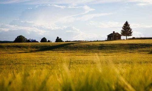 AGRICOLTURA BIODINAMICA: IN PARTENZA DUE CORSI FORMATIVI