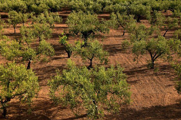 BIO IN SICILY: PESCA, TURISMO E AGRICOLTURA SOSTENIBILE, NELL'ISOLA PIÙ A SUD D'ITALIA