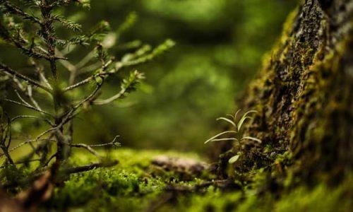 LAZIO PUNTA SULL'AGRICOLTURA BIO: CINQUE NUOVI BIO-DISTRETTI RICONOSCIUTI